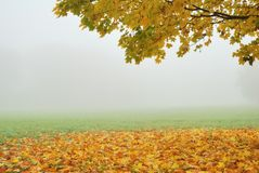 Tree branch with yellow trees in fog Stock Images