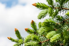 Tree branch with young shoots Royalty Free Stock Image