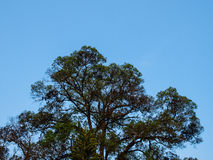 Tree branched on blue sky. In horizontal Royalty Free Stock Images