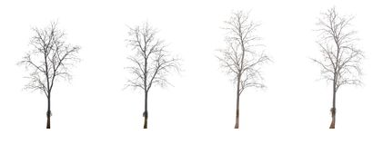 The tree is branched off without leaves. In the fall Royalty Free Stock Photo