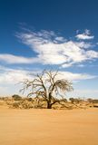 Tree branchees in the Sossusvlei desert, Namibia Royalty Free Stock Photos