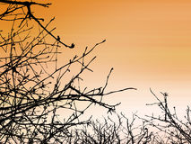 Tree Branches. Detailed Tree Branches on orange Royalty Free Stock Photography
