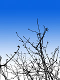 Tree Branches. Detailed Tree Branches Stock Image