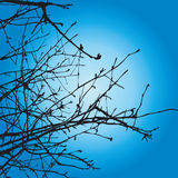 Tree Branches. Detailed Tree Branches - additional ai and eps format available on request Stock Photo