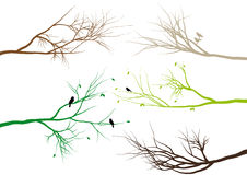 Tree branches,. Tree branches with birds and leaves,  background Stock Photography