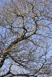 Tree Branches Stock Photos