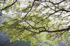 Tree branches. Royalty Free Stock Photos