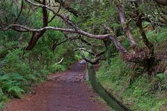 Tree branches above footpath and levada canal on Madeira. Tree branches above footpath and levada canal on Portuguese island of Madeira stock photo