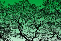 Abstract Black Tree Branches on background Green highlight. Tree Branches Abstract Black on background Green highlight Stock Image