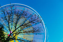 Tree Branches Against Backdrop Of Bright Spinning Ferris Wheel At Spring Evening Or Night. Royalty Free Stock Photos