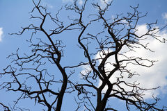 Tree branches against blue sky Stock Image