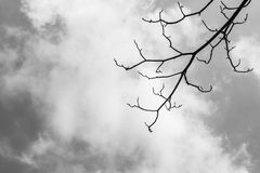 Tree branches against the sky(black and white theme) Stock Photo