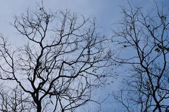 Tree branches against the sky. Fairy gloomy forest stock photos