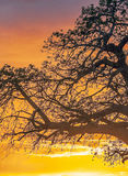 Tree branches Royalty Free Stock Photo