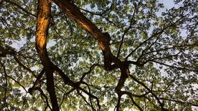 Tree and branches ant eye view stock footage