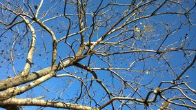 Tree branches in autumn afternoon. Abstract image of tree with dry twigs in blue sky in late autumn afternoon. good lighting and details in original format for Stock Image