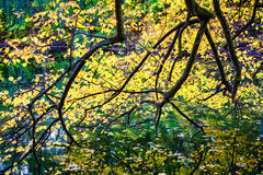 Tree branches autumn foliage Royalty Free Stock Photography