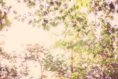 Tree branches autumn leaves royalty free stock photography