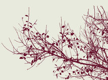 tree branches in the autumn season Royalty Free Stock Photos
