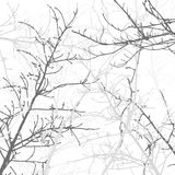 Tree Branches Background Pattern. Vector illustration. Royalty Free Stock Image