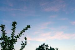Tree branches on a background of pink cirrus clouds