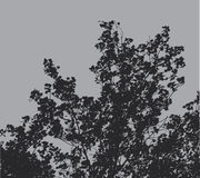 Tree Branches Background Royalty Free Stock Photos