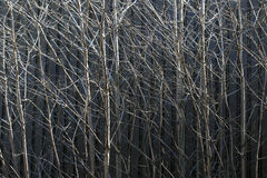 Tree branches. Bare tree branches against metal Stock Image