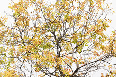 Tree branches. Is beautiful nature stock photography