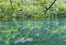 Tree branches bent to the water.At the Blue lake.The North Caucasus. Stock Image