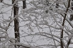 Tree branches in the big snow. royalty free stock photo