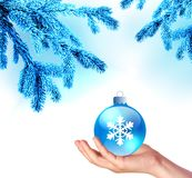 The tree branches in blue frost and hand with Christmas blue ball Royalty Free Stock Photo
