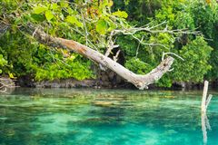 Tree branches on blue lagoon Stock Photography