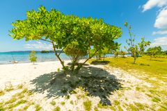 Tree branches on blue lagoon Stock Image