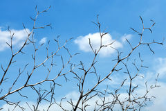 Tree branches with blue sky Stock Photos