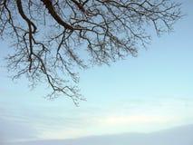 Tree branches Stock Photos