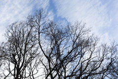 Tree branches blue sky silhouette Stock Photos