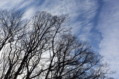 Tree branches blue sky silhouette Royalty Free Stock Photography