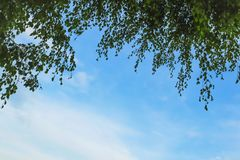Tree branches and blue sky Royalty Free Stock Photos