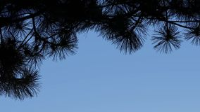 Tree Branches Border On Blue Sky stock footage