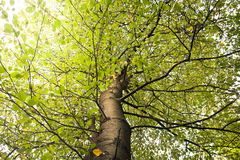 Tree branches royalty free stock photos