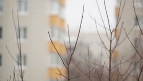 Tree branches and building at the background - view from the window. Shot on Canon 5D Mark II with Prime L Lenses stock video