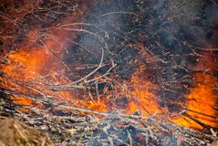 Tree branches burn. Uncontrollable fire stock images