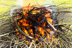 Tree branches burning in spring Royalty Free Stock Image