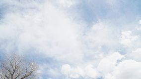 Tree branches and clear sky with some cloud. In sunny day royalty free stock images