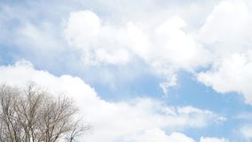 Tree branches and clear sky with some cloud. In sunny day Stock Photography