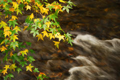 Tree branches and colorful leaves above flowing river Royalty Free Stock Image