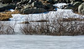 Tree branches coming out of frozen lake and rocky background, Gredos stock photos