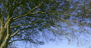 Tree branches contrasting against the blue sky. On a sunny day stock video footage