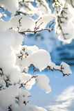 Tree branches covered in heavy snow on a sunny winter morning Stock Images
