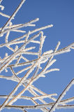 Tree branches covered with hoarfrost. Stock Photo